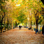 Falling leaves in Rome